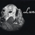 ♥ Luna ♥ - Golden Retriever