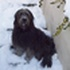 Jona - Bearded Collie - Flat Coated Retriever Mischling