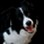 Alida ♥ - Border Collie