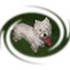 Pretty Duffy - West Highland White Terrier