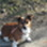 lucie - Jack Russell Terrier