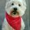 Chanelle-Beauty - West Highland White Terrier