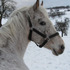 Pia - Arabisches Vollblut, Araber - Appaloosa Mix