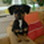 Lilo - Jack Russell Terrier - Dachshund Mischling