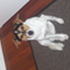 Jacky - Jack Russell Terrier